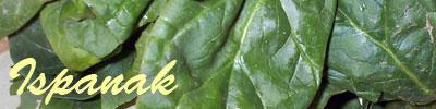 spinach tarifleri