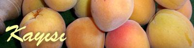 apricot tarifleri