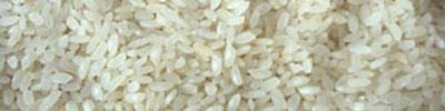 riz recettes