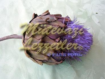 Enginar Çiçeği (fotoğraf)