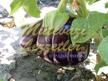 Tarla Patlıcan (fotoğraf)