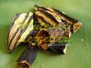 Patlıcan Dolması Kurusu (fotoğraf)