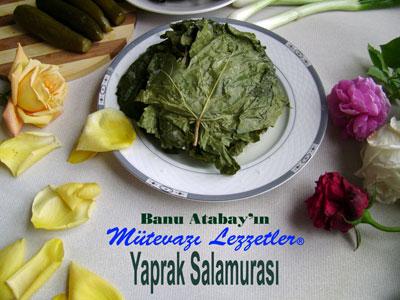 Yaprak Salamuras� (g�rsel)
